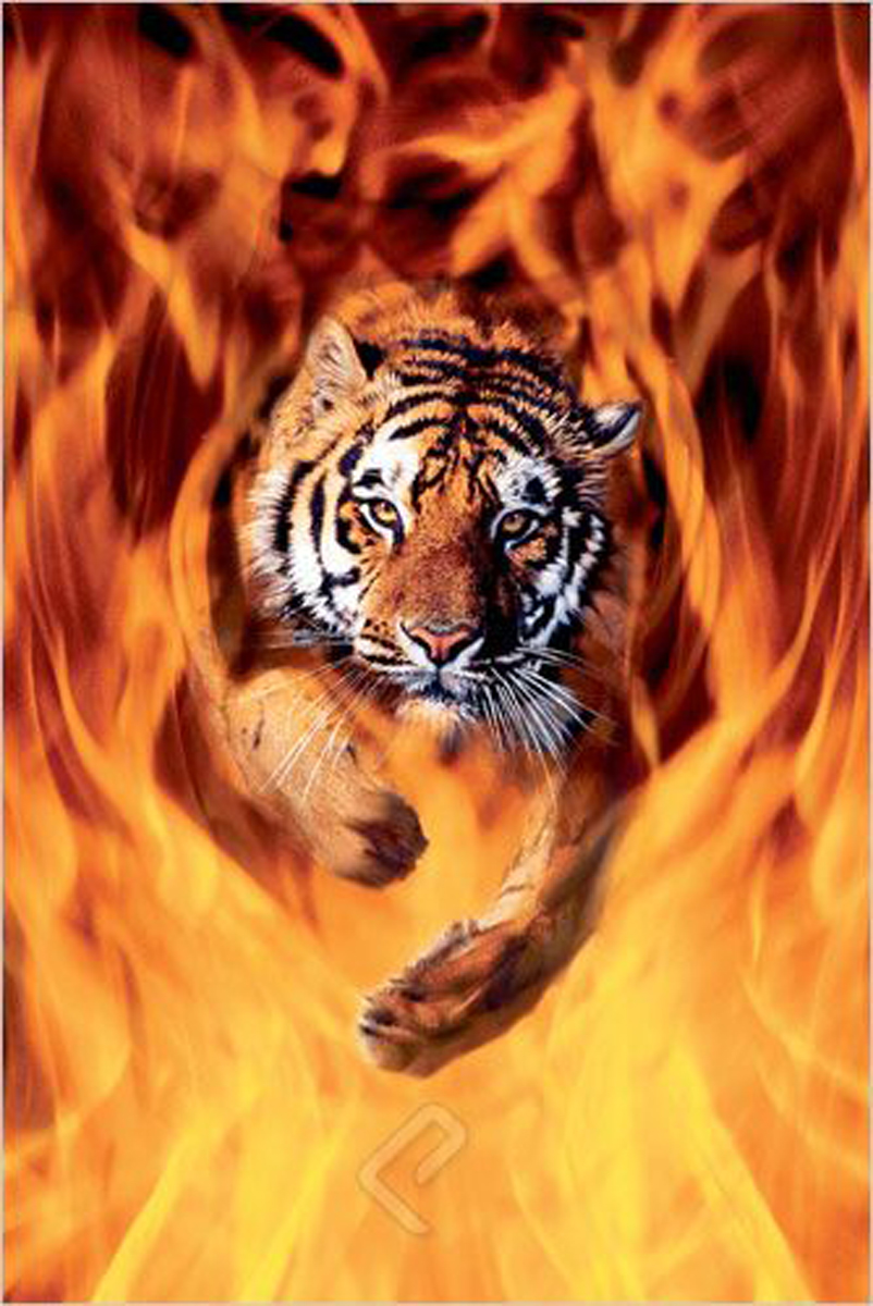 Eurographics 1751-1337 Bengal Tiger Jumping Flames Stretched Canvas 24x36